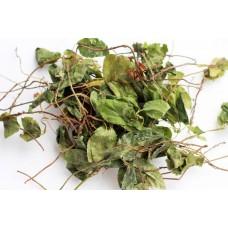 Боровая матка   (ортилия однобокая, женская трава, боровушка, заячья соль, orthília secúnda) (100г)